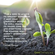 cynthia occeli seed quote